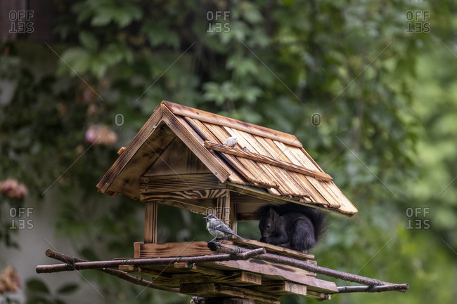 Bird house, garden birds, squirrels, summer, birds feed all year round, titmouse
