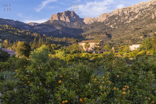Finca and Puig Major (1.445m) in the distance, Sierra de Tramuntana, Fornalutx, Mallorca, Balearic Islands, Spain