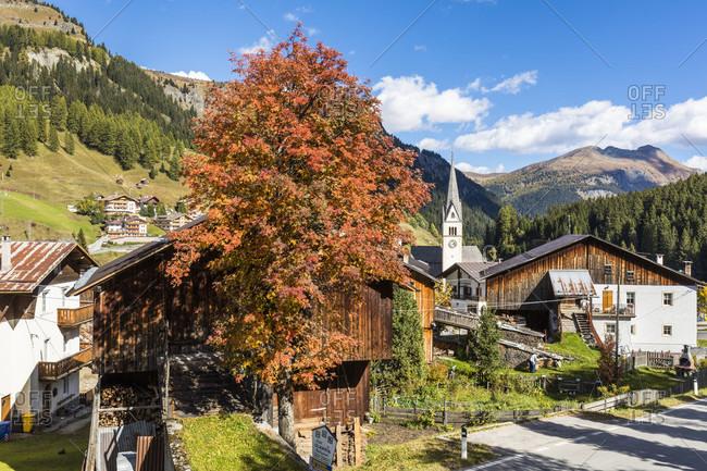 October 6, 2017: Common ash tree (Fraxinus excelsior) in autumn colors in front of the parish church, Arabba, Alto Agordino, Belluno district,, Alps, Dolomites, Sellaronda, Veneto,   Italy