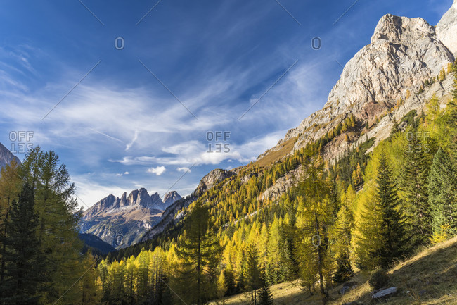 Colorful larch trees and Langkofel (3181m) in autumn, Contrin valley, Val di Fassa, Canazei, Dolomites, TrentinoAlto Adige, South Tyrol, Italy