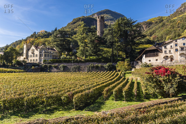 Treuenstein Castle ruins (13th. century) and Torre Druso with vineyards, Talferbach, Province Bolzano, TrentinoAlto Adige, South Tyrol, Italy