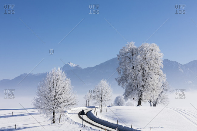 Snow covered trees by a road in a winter landscape, Oberbayern, Bavaria, Germany