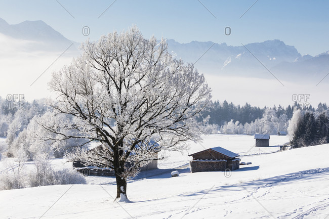 Snow covered winter landscape in front of the Alps near Murnau am Staffelsee, Oberbayern, Bavaria, Germany