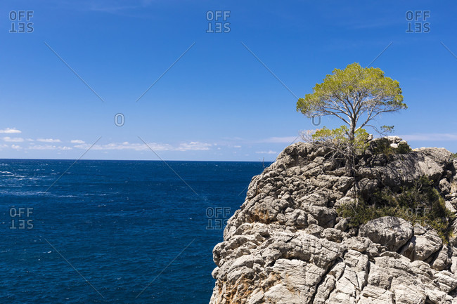 Solitaire pine tree on a rock at Sa Calobra, Escorca, Sierra de Tramuntana, Mallorca, Balearic Islands, Spain