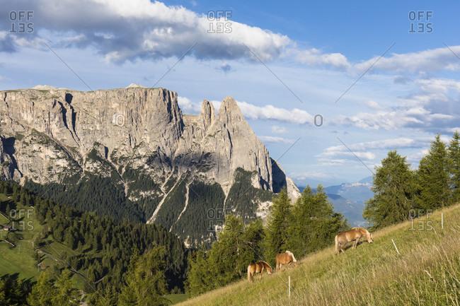 Schlern (2563m) and Santner Spitze (2413m), Alpe di Siusi, Seiser Alm, Sciliar-Catinaccio Nature Park, Bolzano District, Trentino-Alto Adige, South Tyrol, Italy
