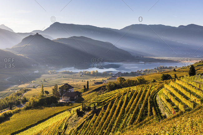 Vineyards in autumn with Lake Kaltern and mountains, Kaltern on the Wine Road, Caldaro sulla Strada del Vino, South Tyrolean Wine Road,, Bolzano (Bozen) District, Trentino-Alto Adige, South Tyrol, Italy