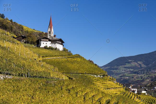 Church and farm above vineyards, San Pietro Mezzomonte, Isarco Valley, Dolomites, Bolzano district, TrentinoAlto Adige, South Tyrol, Italy