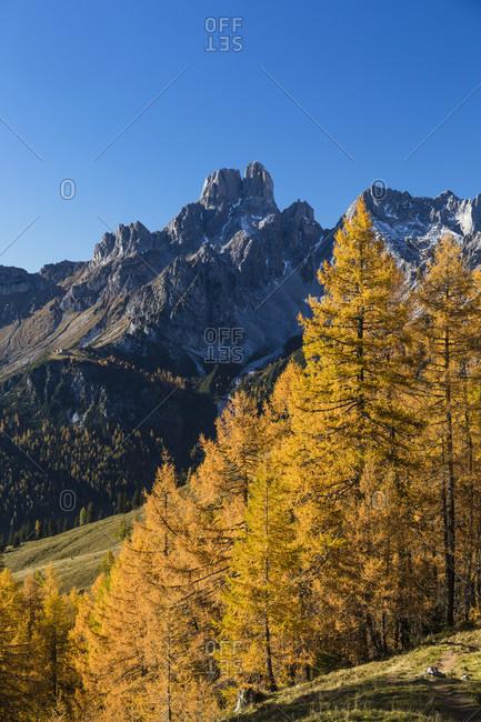 Autumn landscape in front of Bischofsmuetze (2458m), Sulzenalm, Dachstein Range, Filzmoos, Pongau, Salzburg, Austria