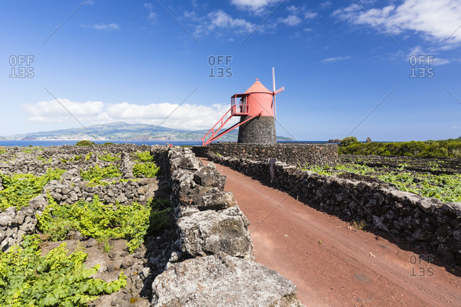 Rural road leading to a red windmill among wine growing fields on lava with stone walls for shelter