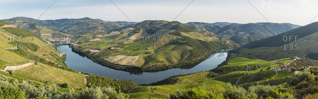 Elevated view on terraced vineyards on the slope of the Douro Valley and the village of Pinhao, UNESCO World Heritage