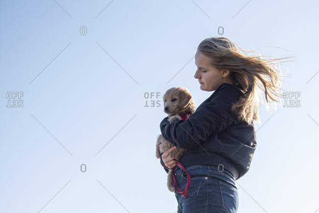 An 8-week-old Mini Goldendoodle (a mixture of Golden Retriever and Miniature Poodle) can be carried by its owner.