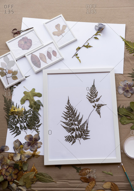 Dry leaves on white frames over cardboard