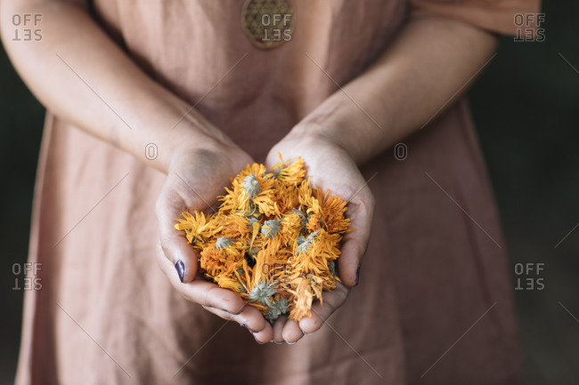 Midsection of woman holding fresh orange flowers on clasped hands