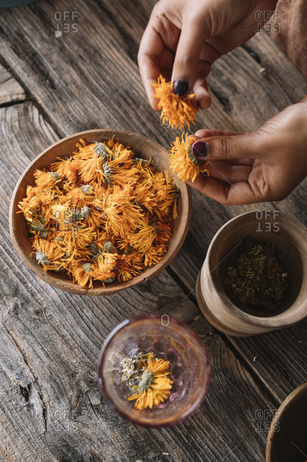 Hands of woman choosing fresh orange flowers for preparing herbal tea on wooden table