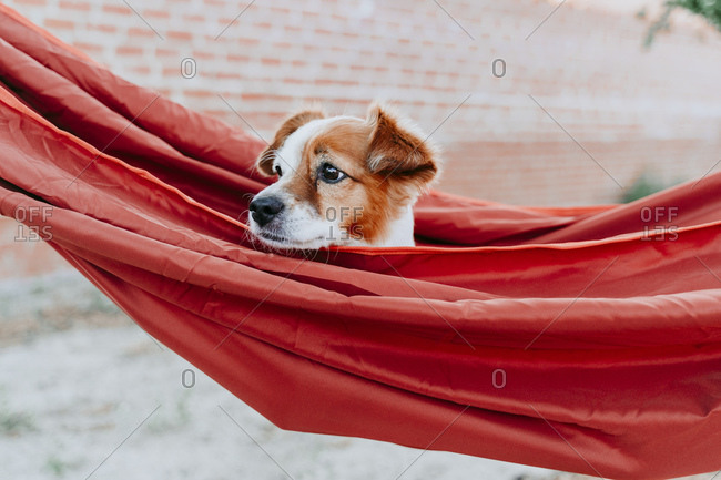 Cute puppy lying in orange hammock while looking away