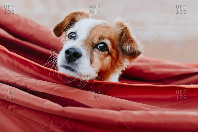 Cute puppy relaxing in orange hammock