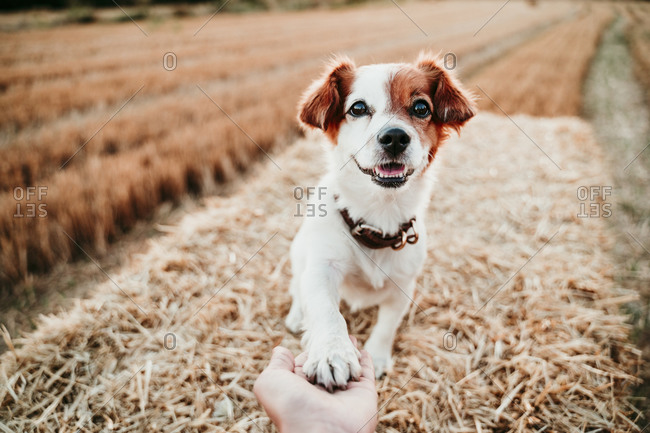 Woman's hand holding paw of dog on straw bale