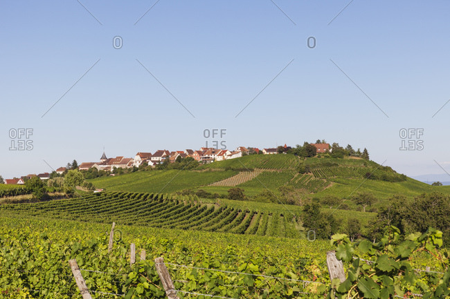 France- Haut-Rhin- Riquewihr- Clear sky over countryside village and surrounding vineyards in summer