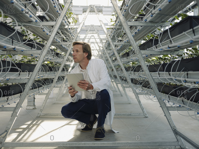 Scientist holding tablet in a greenhouse