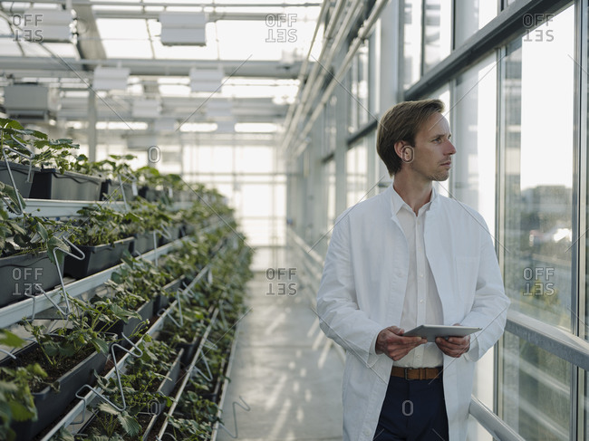 Scientist holding tablet in a greenhouse looking out of window