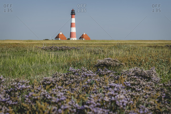 Germany- Schleswig-Holstein- Westerhever- Springtime meadow with Westerheversand Lighthouse in background