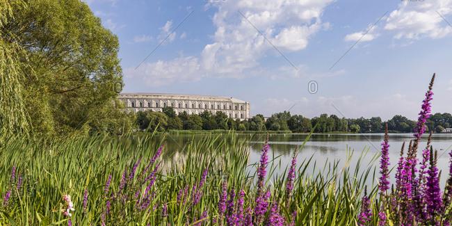 Germany- Bavaria- Nuremberg- Purple wildflowers blooming on grassy lakeshore in Volkspark Dutzendteich park with Congress Hall in background