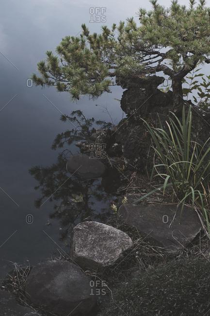 Tree and rocks at waters edge, Shinjuku Gyoen Park, Tokyo, Japan