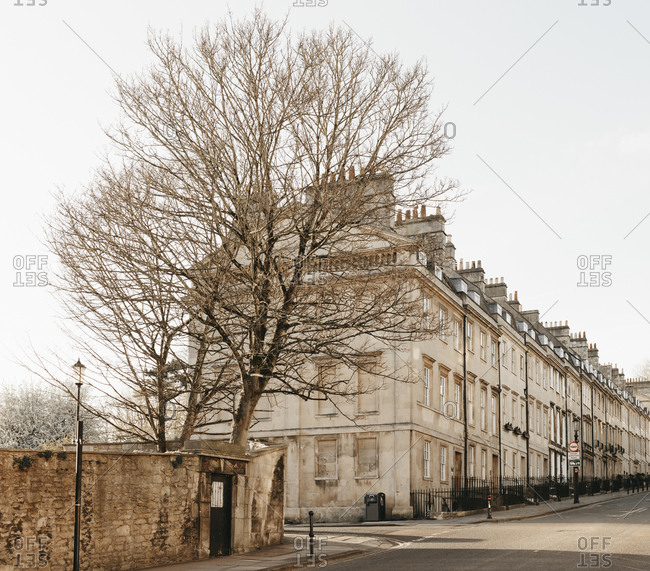 Bare tree and buildings along sunny empty street, Bath, Somerset, UK