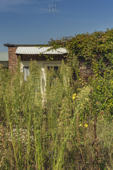 Overgrown plants in front of a brick house