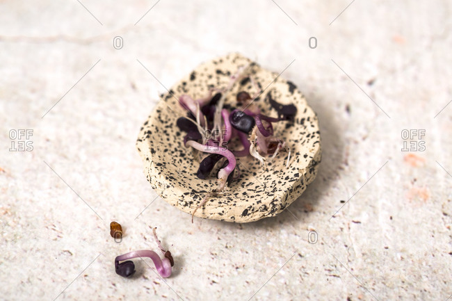 Microgreen seedlings in a speckled dish on a light surface