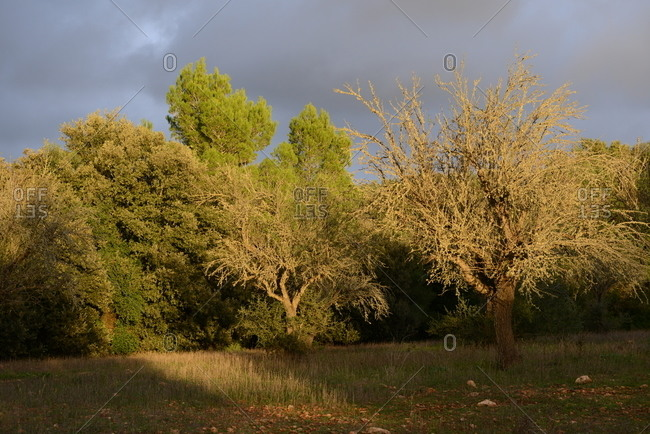 Green trees in a forest under dark clouds