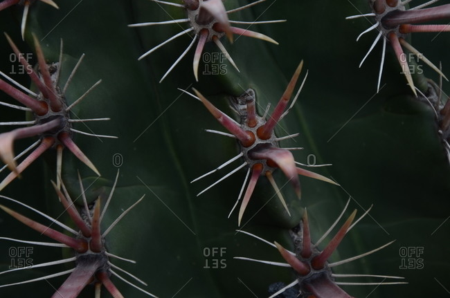 Close up of a cactus with red thorns