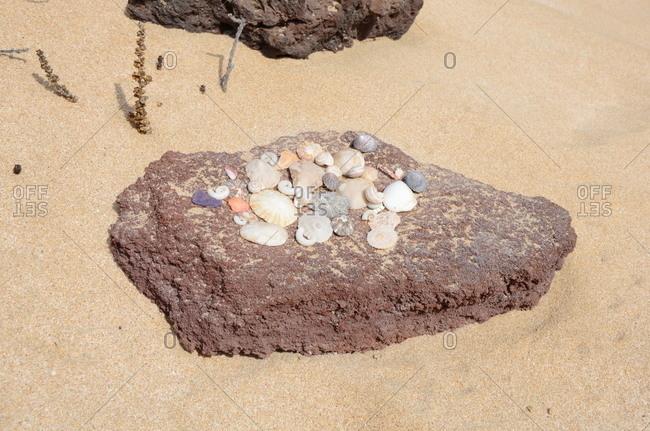 Seashell collection on a sandy beach