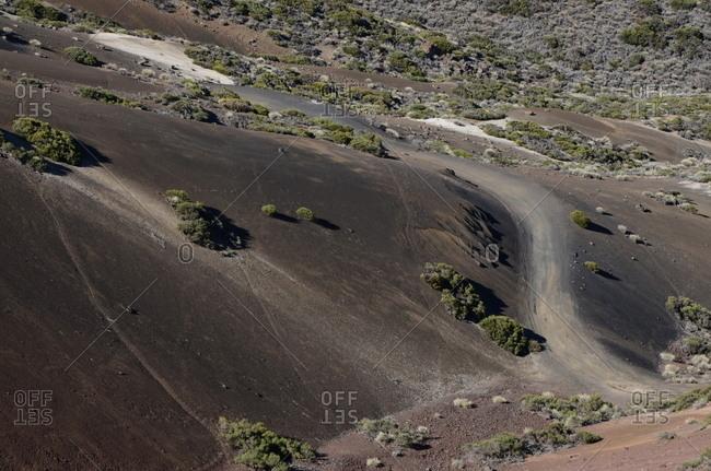 Path on hillside with green desert plants
