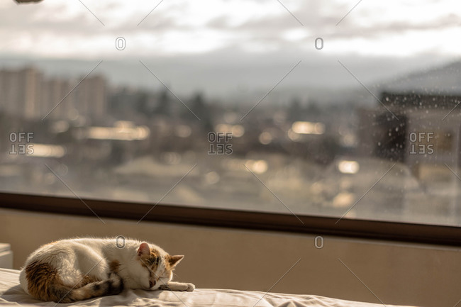Cat sleeping in city apartment