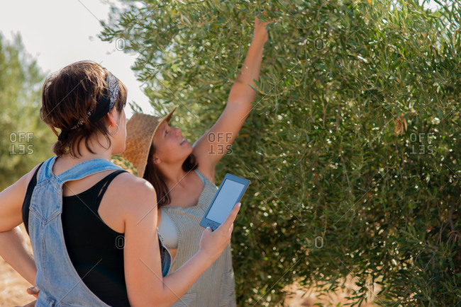 Female friends standing in green garden in countryside and collecting fruits from tree