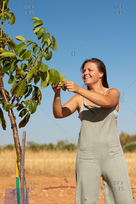 Female standing in green garden in countryside and collecting fruit from tree