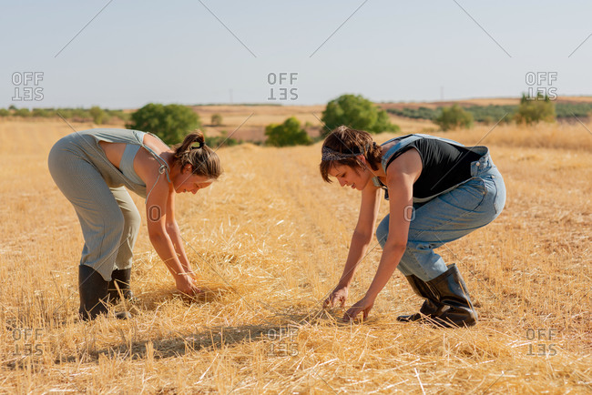 Side view of women in overalls and rubber boots harvesting dried grass while in village in summer