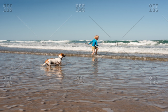 Small dog watching child playing in waves at beach in New Zealand