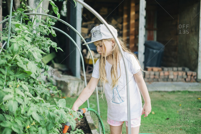 Young girl watering tomato plants in the backyard