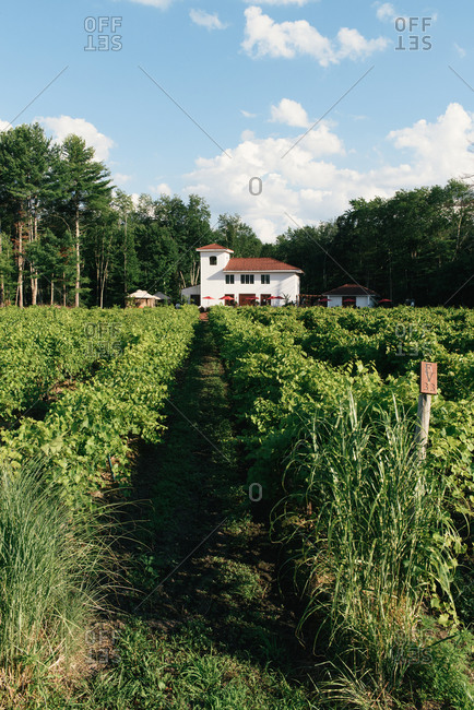 Hollis, NH, United States - July 29, 2020: A tasting room sits at the end of rows of vineyards in a forest