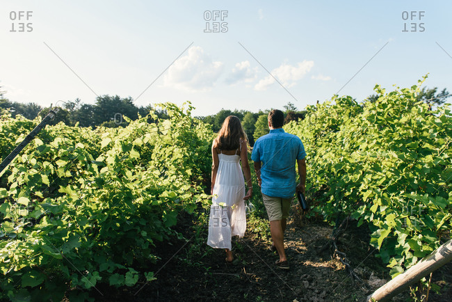 Stylish couple walking away into rows of vineyard with bottle of wine