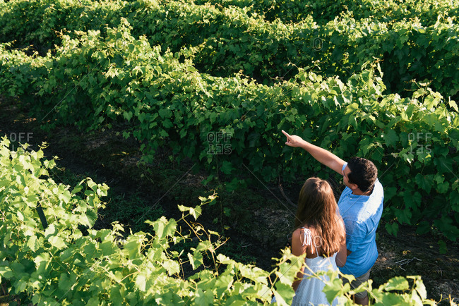 Overhead of couple walking away through rows of vineyards