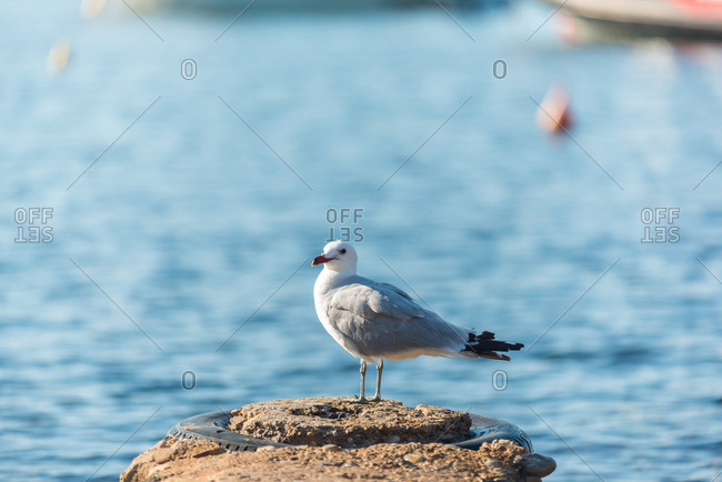 White seagull standing on rough stone in sea on sunny day in Sa Caleta