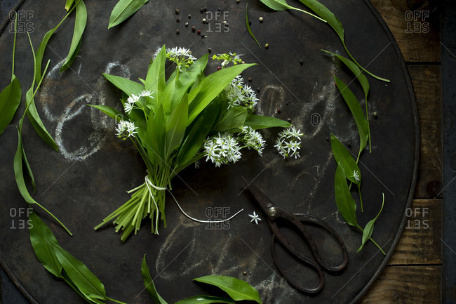 Scissors and bundled ramson on rustic baking sheet