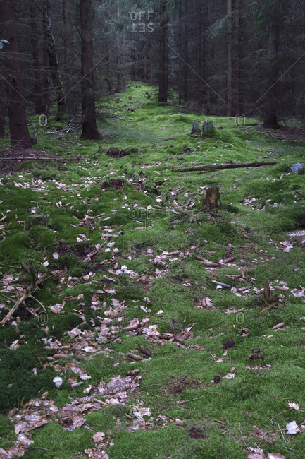 Green grass and tree stumps in forest