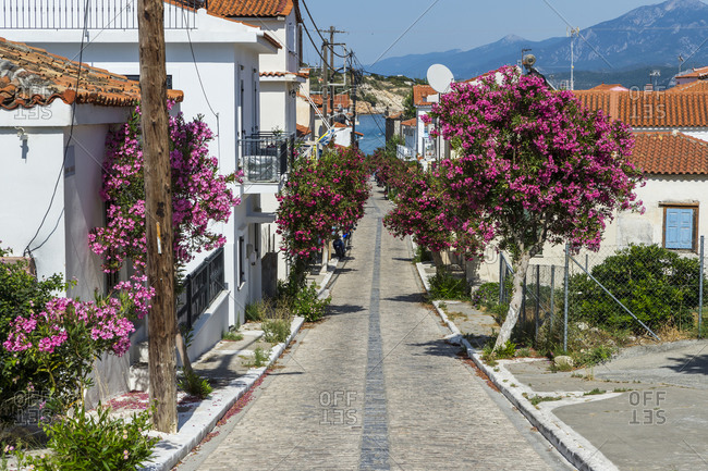 Greece- North Aegean- Pythagoreio- Houses and pink blossoming trees along cobblestone town street
