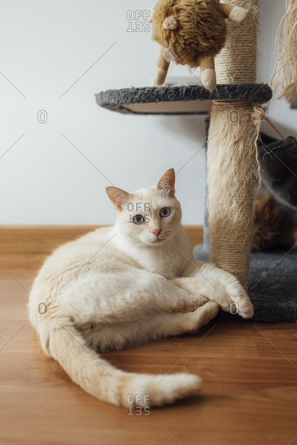 Cat relaxing while sitting down on floor at home