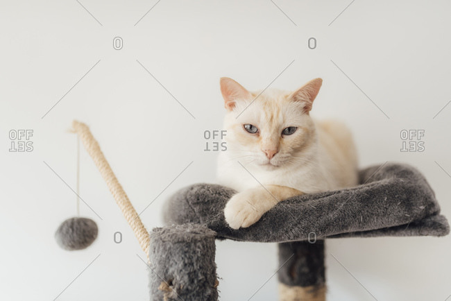 Cat sitting on cushion at home
