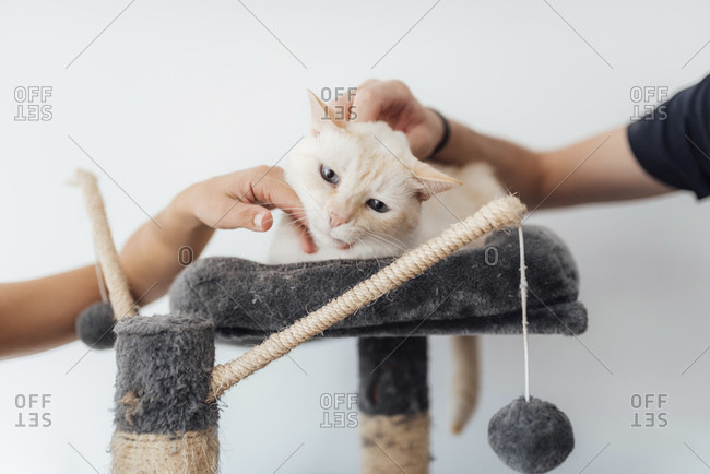 Close-up of hands playing with cat lying on cushion